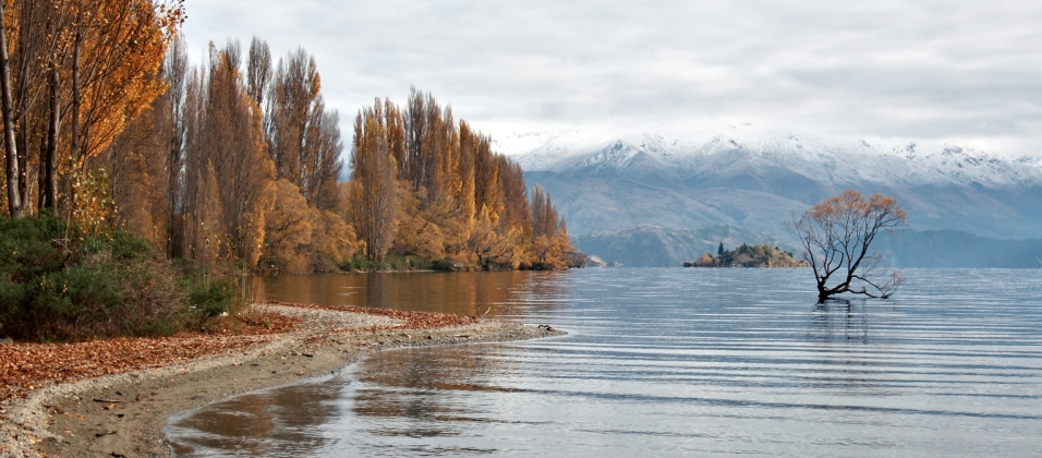 Lonesome Tree: Wanaka **