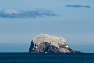 Gannet Colony in full glory